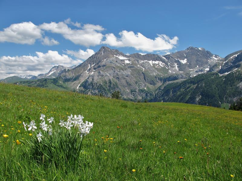 Download Summer In The Bernese Oberland Stock Image - Image: 25462901