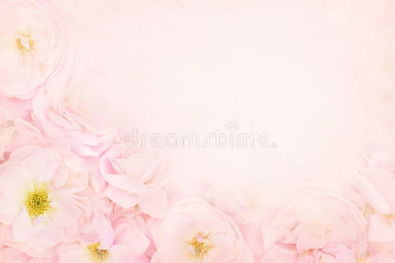Summer blossoming delicate roses or pink spring blooming flowers festive background. Pastel and soft bouquet floral card, toned royalty free stock image
