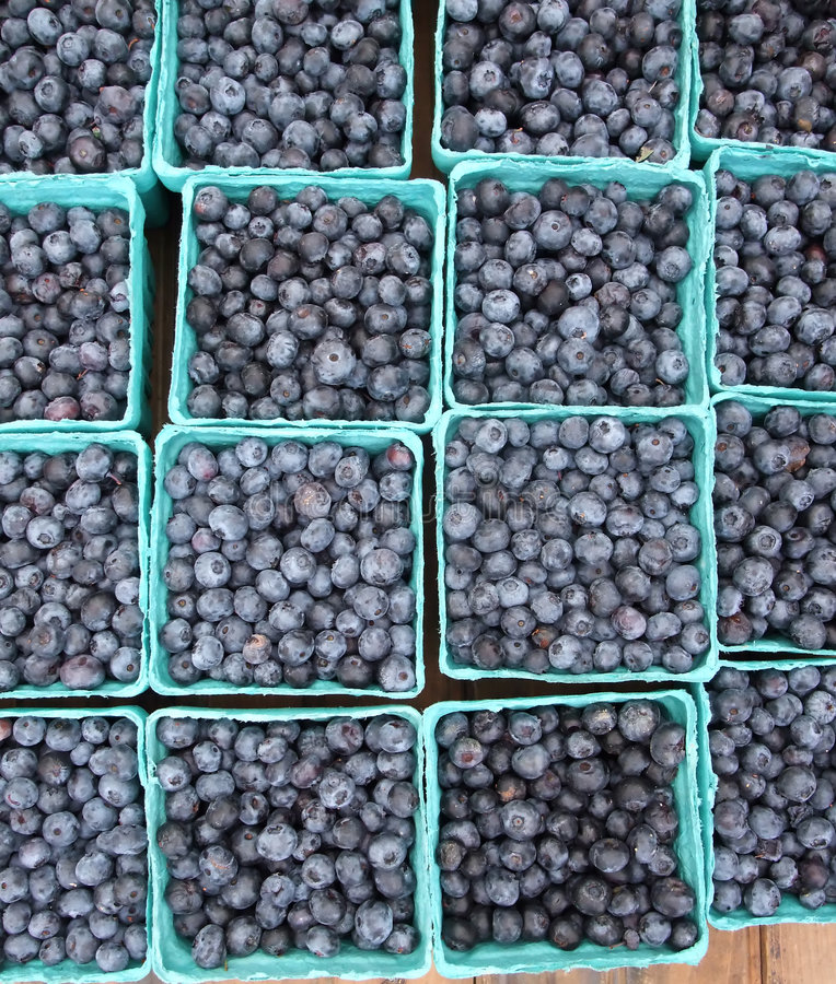 Summer Blueberries royalty free stock photos