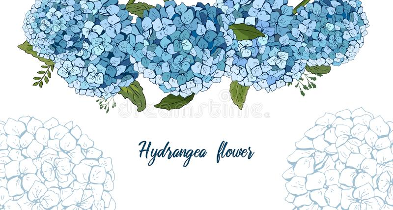 Summer botanical vector design banner. hand drawing . Light blue hydrangea. Natural card or frame. Floral borders. All elements. Are isolated and editable vector illustration