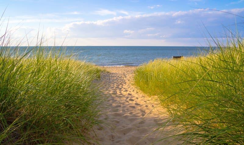 Summer Breeze. Sunlight dances on dune grass as the warm summer breeze blows Port Crescent State Park Port Austin, Michigan royalty free stock photos