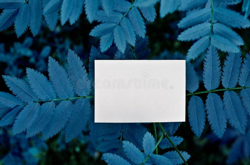 Business card Mockup.Nature concept in Forest. Summer poster. Color of the year 2020 classic blue stock photography