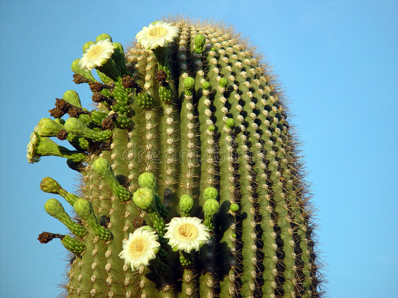 Summer cactus royalty free stock photography
