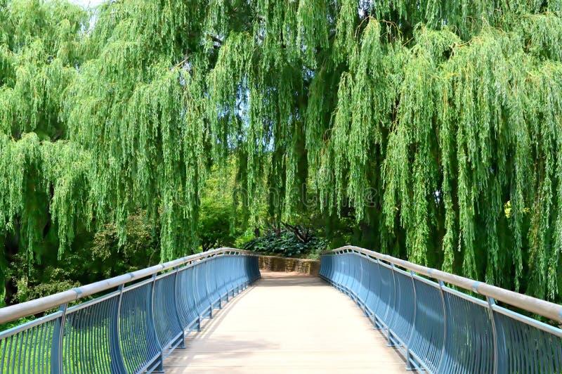 Summer at Chicago Botanic Garden stock photos