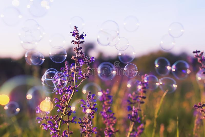 Summer clear glade with delicate lilac flowers and bubbles brightly shimmer and Shine in the air in a pink sunset royalty free stock images
