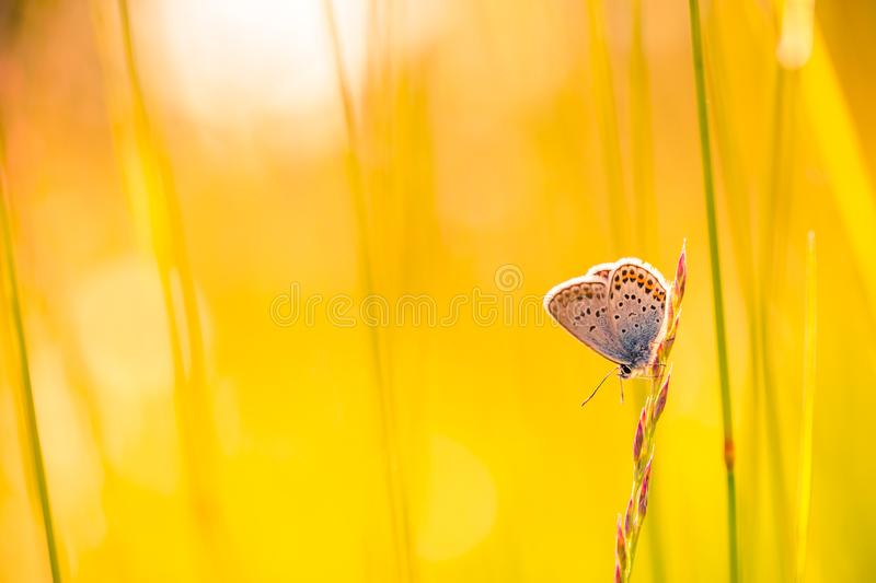 Summer closeup butterfly in sunset light. Bright landscape. Inspirational nature banner background. royalty free stock image