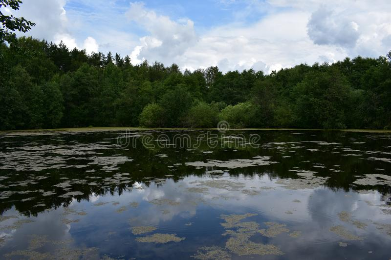 Summer clouds in the blue sky above the forest pond lake reflected in the water, low bowed tree branches stock photo
