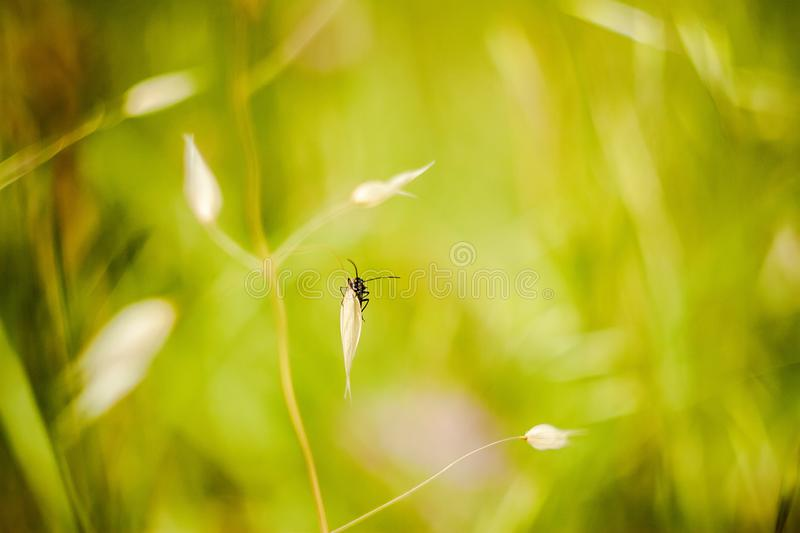 Summer colours outdoors stock images