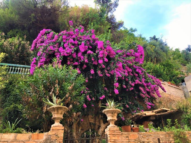 Summer, colours, villa and bouganvilla stock photo