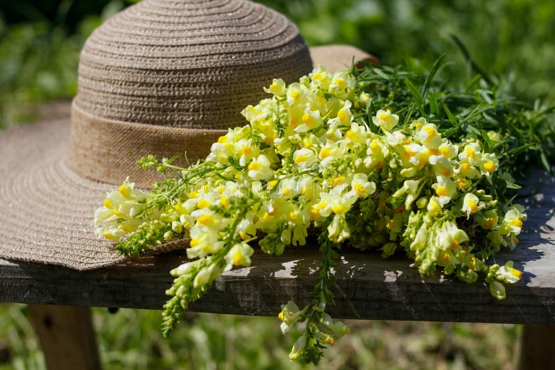 Summer composition. A bouquet of wild flowers snapdragon and women`s sunhat royalty free stock images