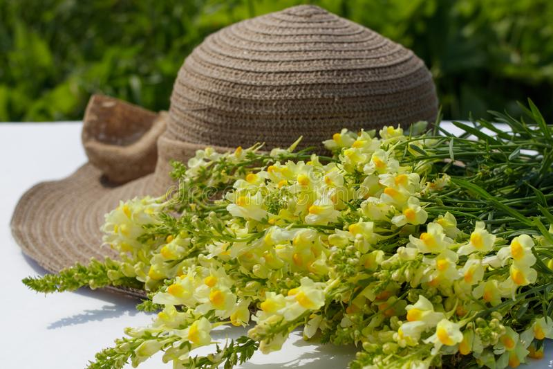 Summer composition. A bouquet of wild flowers snapdragon and women`s sunhat. stock photos