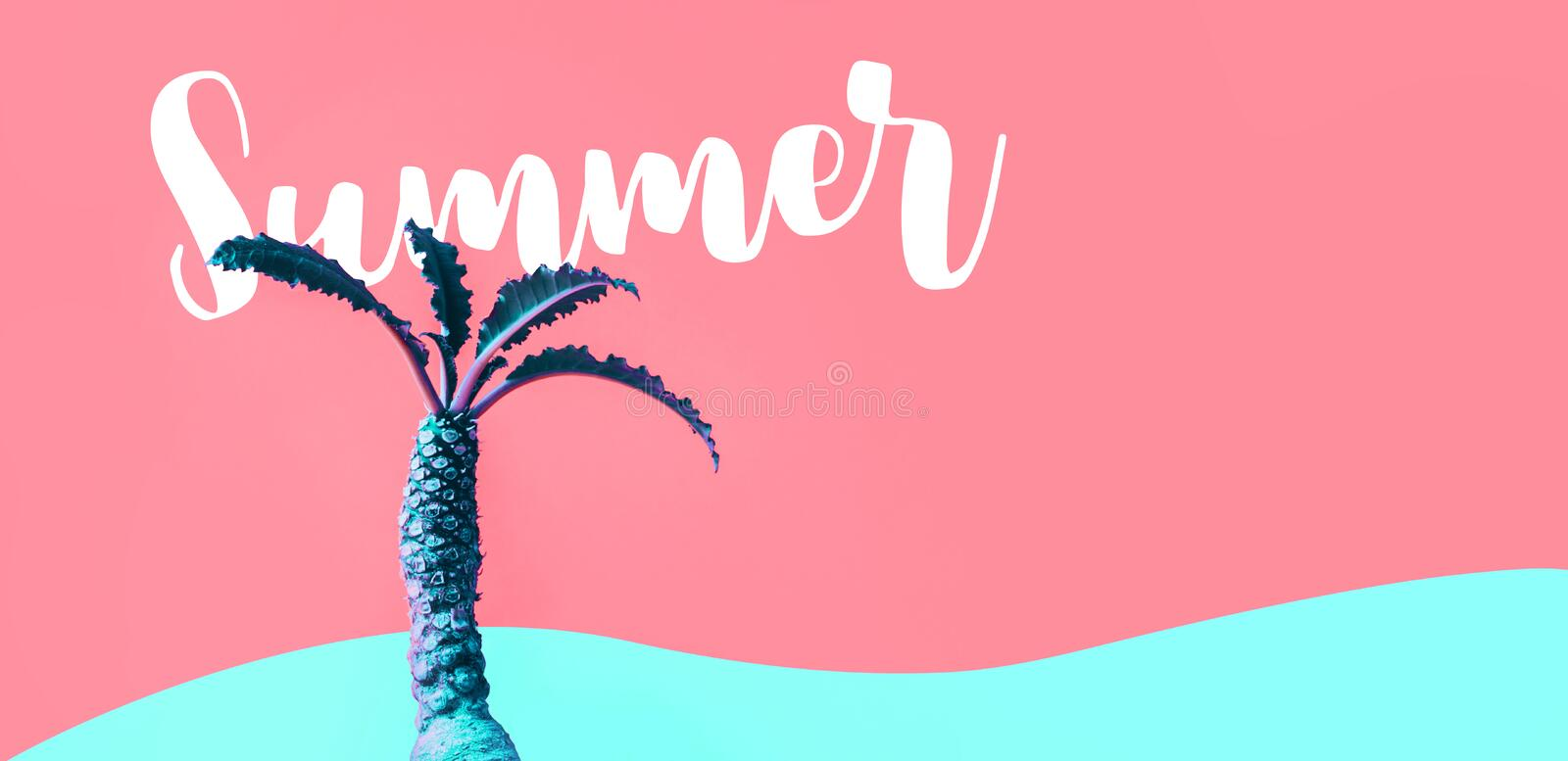 Summer concept with exotic color of Dorstenia cactus on colorful royalty free stock photography