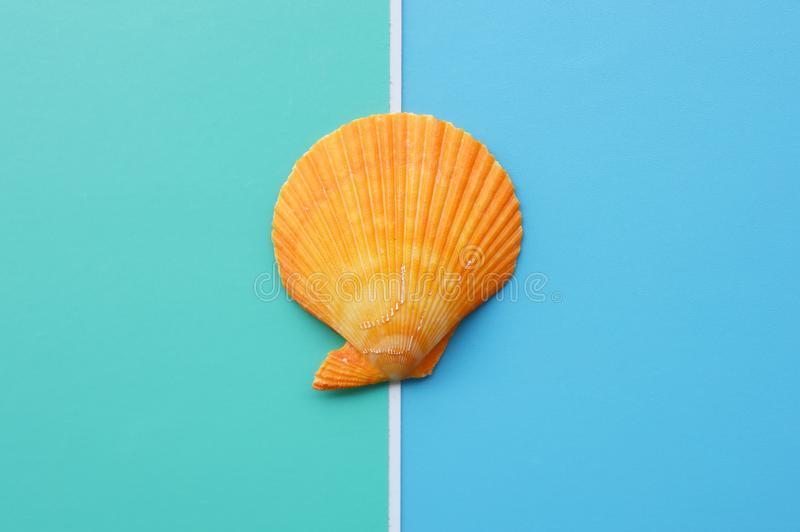 Summer concept of seashells royalty free stock photography