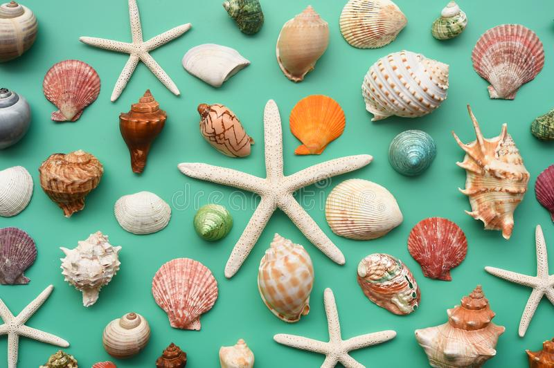 Summer concept. Starfish and seashells stock images