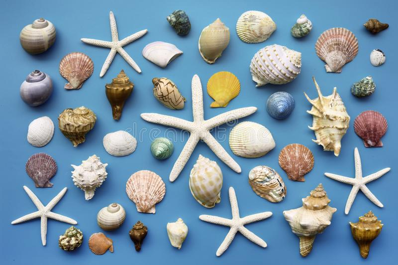 Summer concept. Starfish and seashells royalty free stock photography