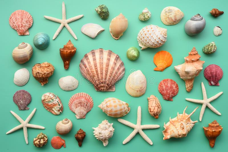 Summer concept. Starfish and seashells stock photography