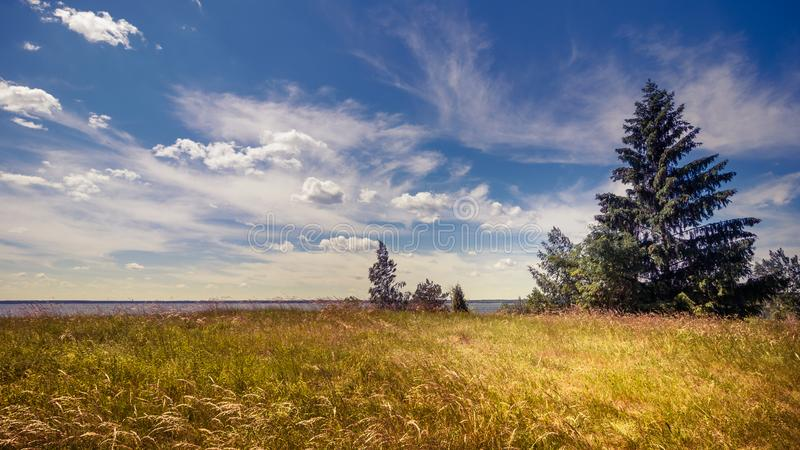 Summer countryside. Beautiful landscape with a spruce on the right against a cloudy sky and grass in the foreground. A picturesque countryside summer landscape stock photo