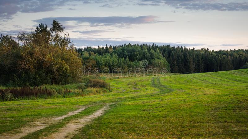 summer countryside. a hilly field with a forest in the background. evening twilight royalty free stock photos