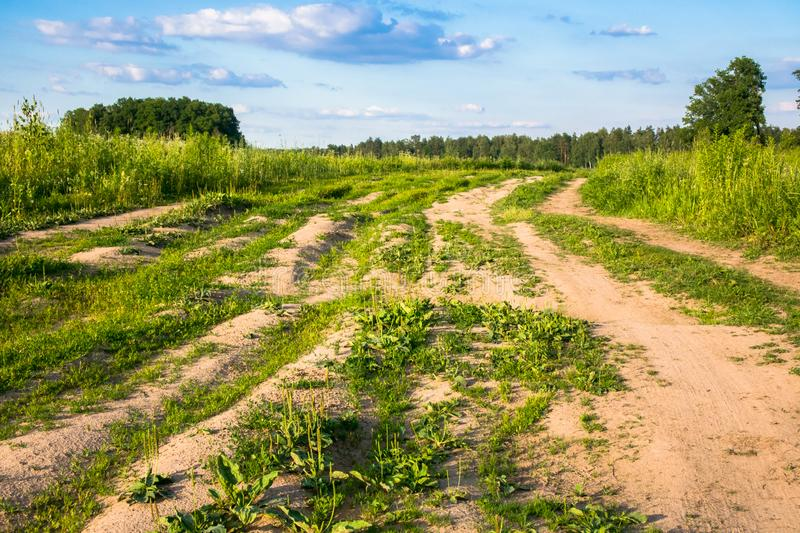 Summer countryside landscape. Deserted rural dirt road along the forest, Moscow suburbs, Russia. June 2018 royalty free stock photo