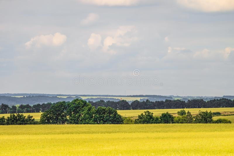 Summer countryside landscape with a green young wheat field. Cereal fields. stock photo