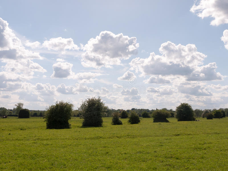 A summer countryside scene outside in essex england of the uk wi. Th a row of plants and trees sticking up and lots of grass and clear weather beautiful and royalty free stock photography