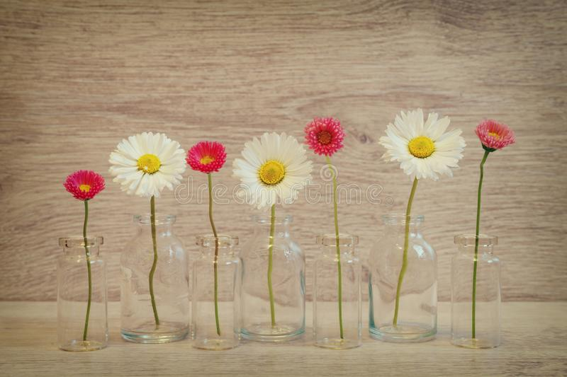 Summer creative still life in minimal style. White and pink Marguerite daisy flowers in small glass bottles on light grey. Background stock photos