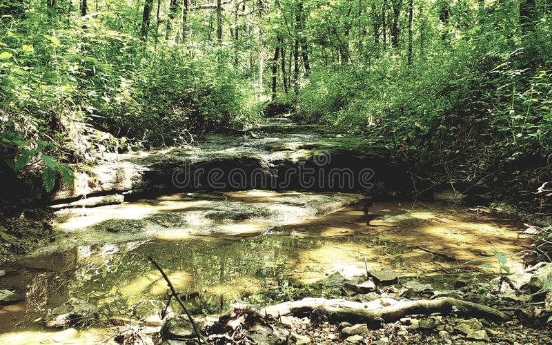 Summer creek royalty free stock photography