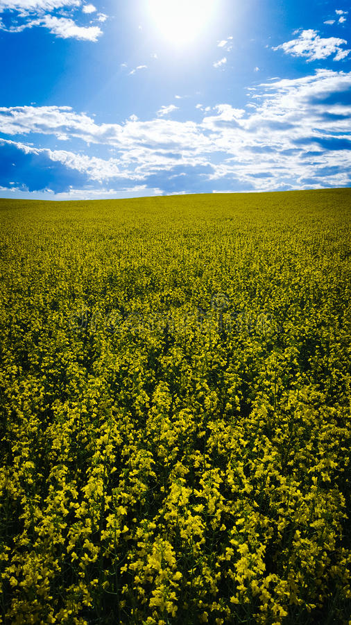 Summer crop royalty free stock photos