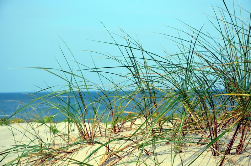 Summer on the Curonian Spit stock photos