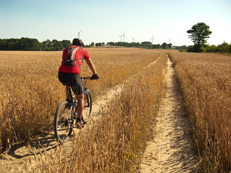 Summer cycling. Summer dirt path cycling across harvested wheat field. Biker figure of a man visible royalty free stock photo