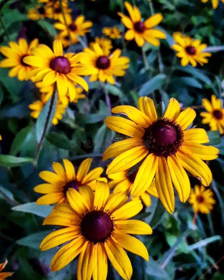Summer daisys stock photo