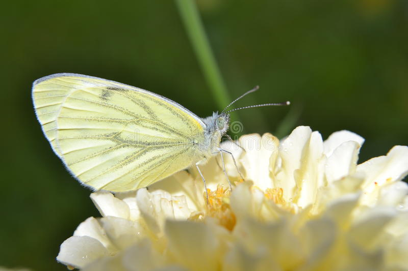 Summer day and butterfly on the flower stock image