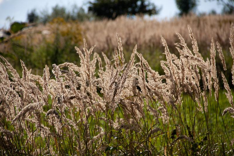 Summer day in the field, tall grass. Mountains, blue sky royalty free stock photography