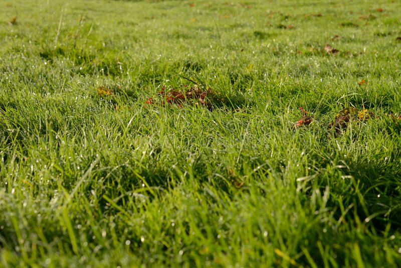 Download Summer dew stock image. Image of copy, morning, up, green - 34945477