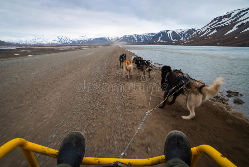 Summer dog sledding, first person perspective royalty free stock photos