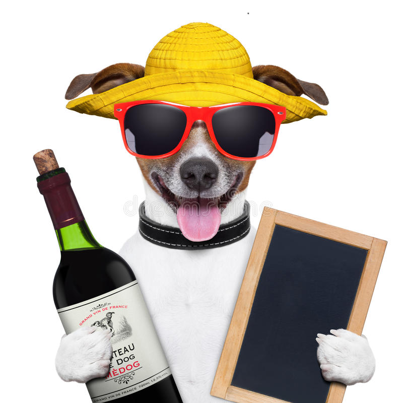 Summer dog and wine bottle. Summer dog with a bottle of wine and blackboard royalty free stock photos