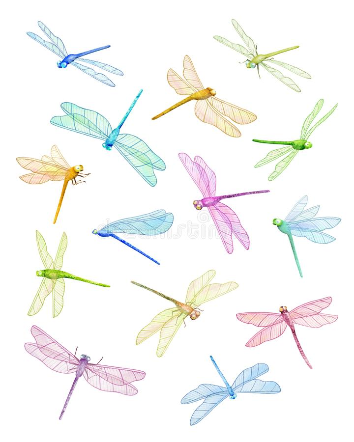 Summer Dragonfly Flying Dragonflies Watercolor Illustration Stock