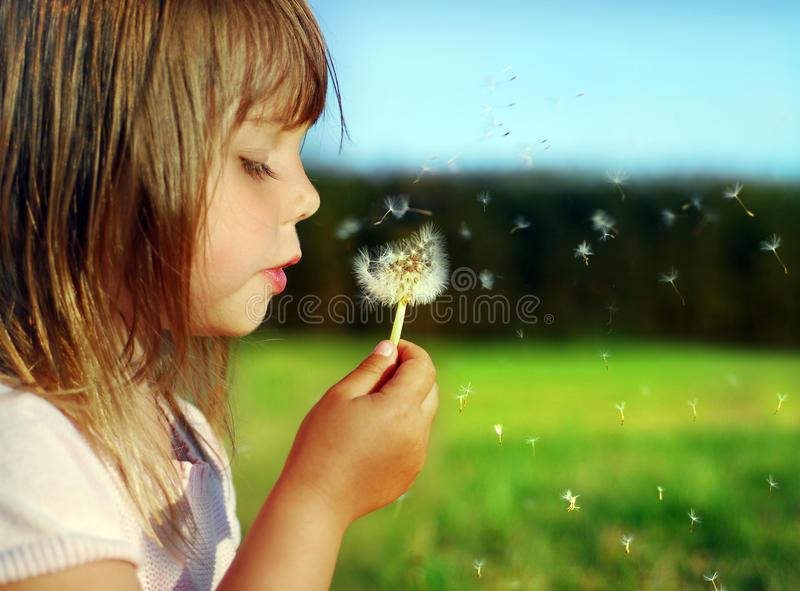 Summer dreams royalty free stock image