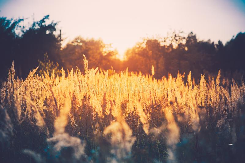 Summer Dry Autumn Grass In Sunset Sunrise Sunlight. Meadow Lands. Cape In Fall Season stock photography