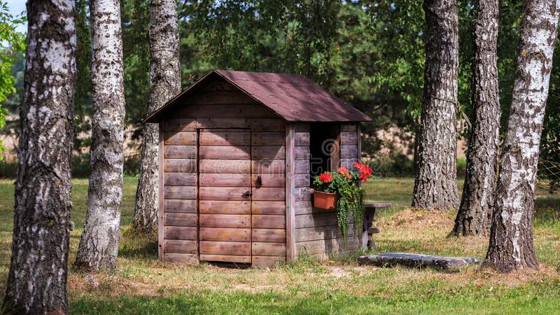 Wooden cottage in brown color between large birch trunks stock image