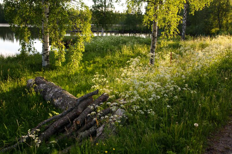 Summer finland evening royalty free stock images