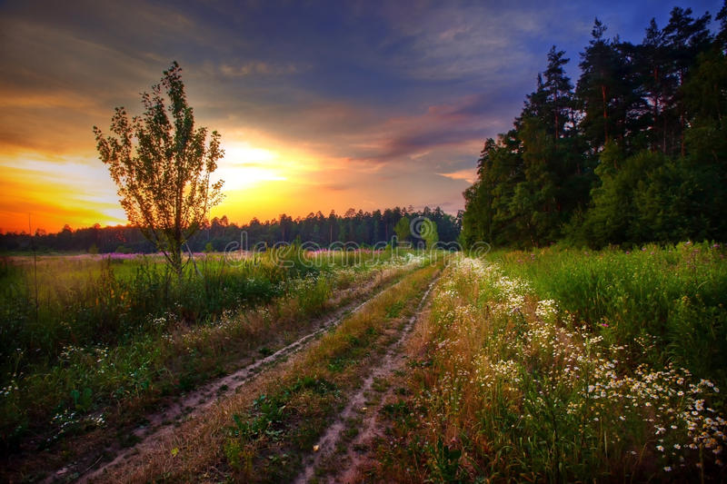 Summer evening stock images
