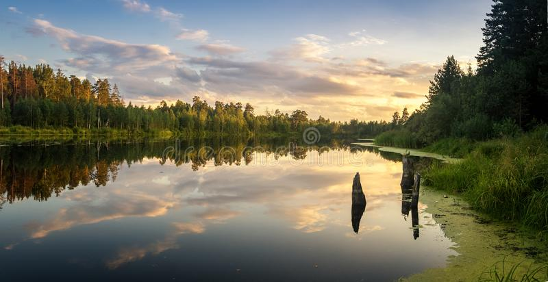 Summer evening landscape on Ural lake with pine trees on the shore, Russia royalty free stock images