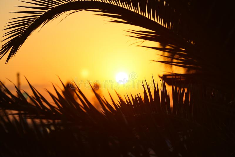 Sunset on the Cote d`azur between palm branches stock photography