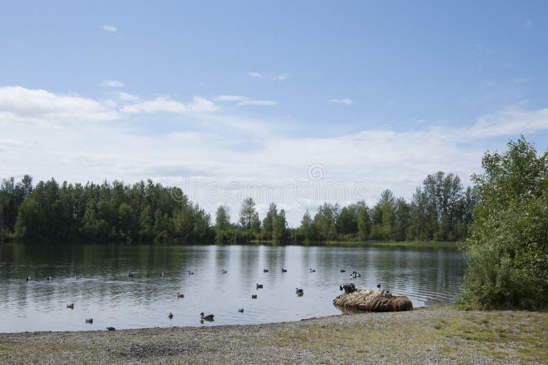Download Summer Family Fun Day Reflections Lake Alaska Editorial Stock Image - Image of lake, state: 56855124