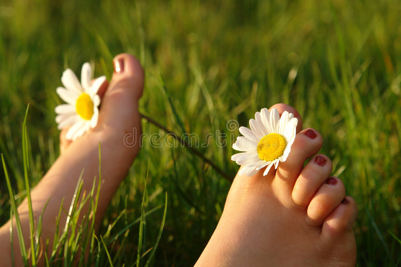 Download Summer feeling stock photo. Image of relax, conceptual - 2339062