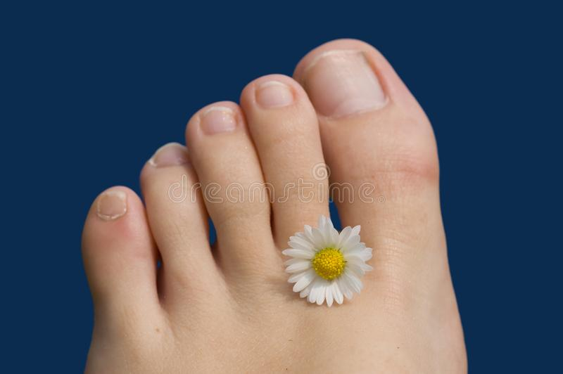 Summer feet toes royalty free stock photo