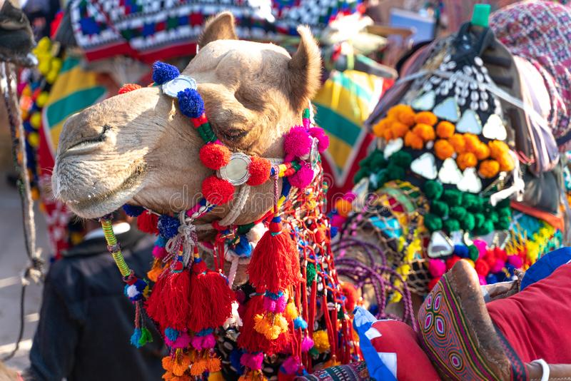 The summer festival in Jaisalmer in India stock images