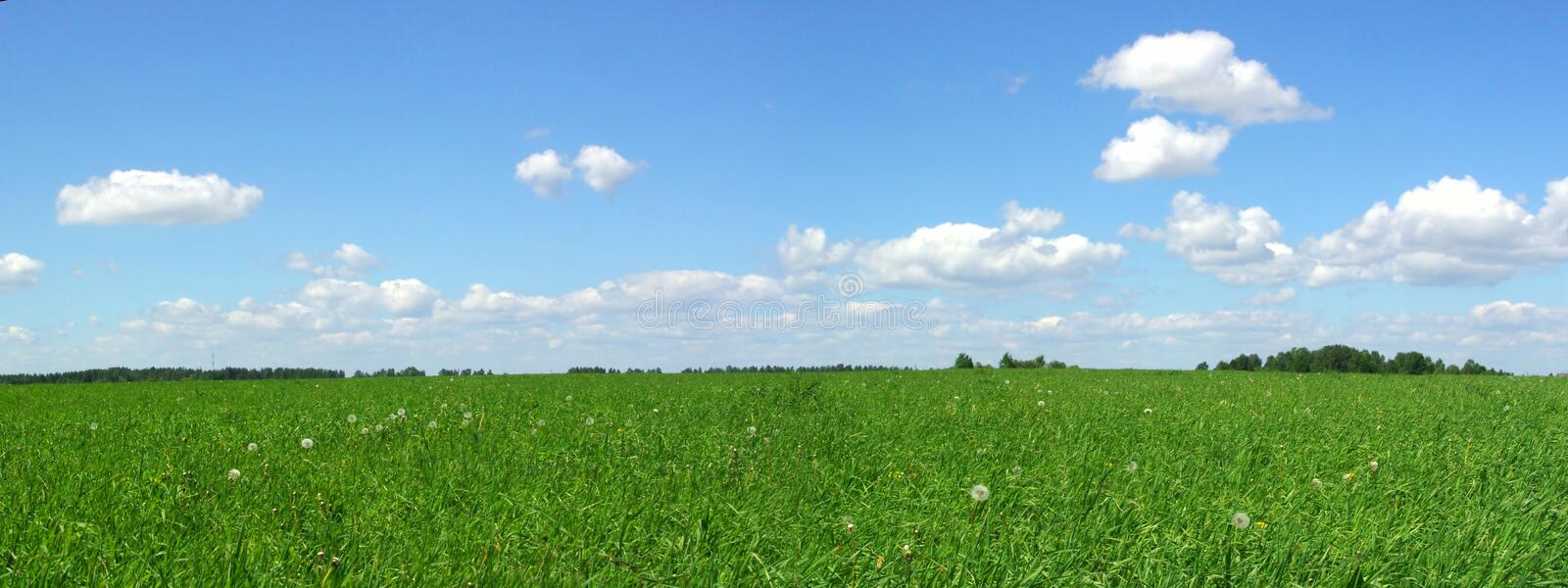 Summer field stock images