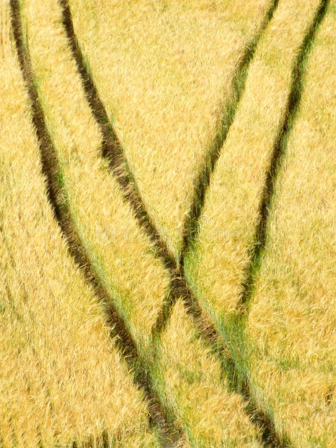 Download Summer field stock image. Image of growing, agricultural - 8270865